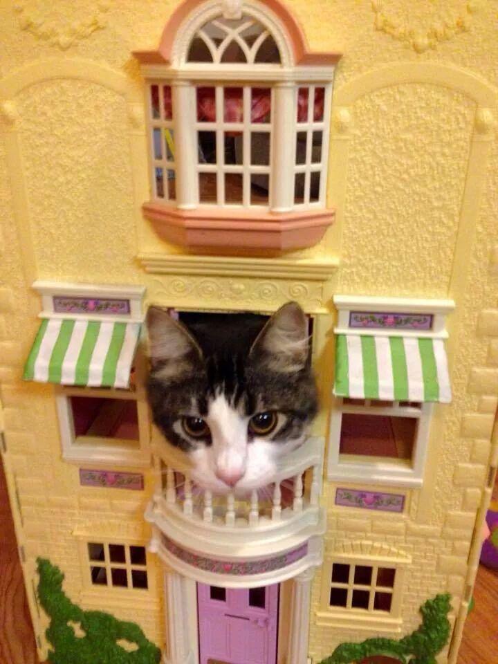 KittyHouse