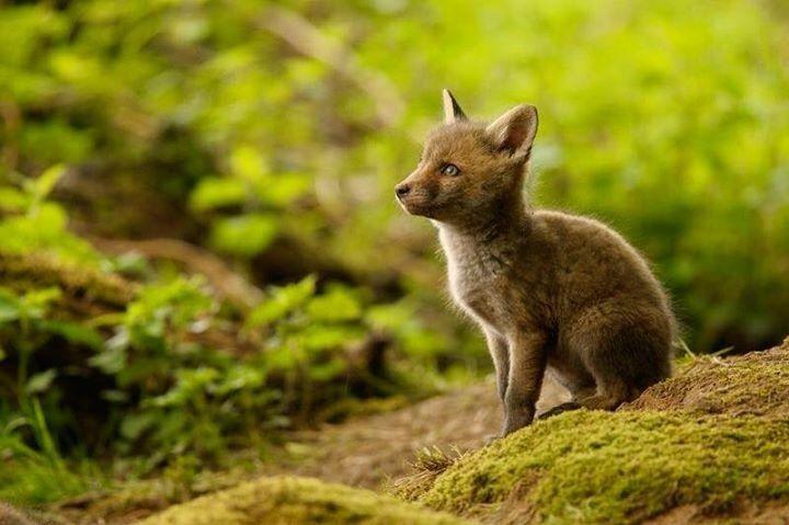 Pin von Atifghhh auf dogs (mit Bildern) Tiere wild