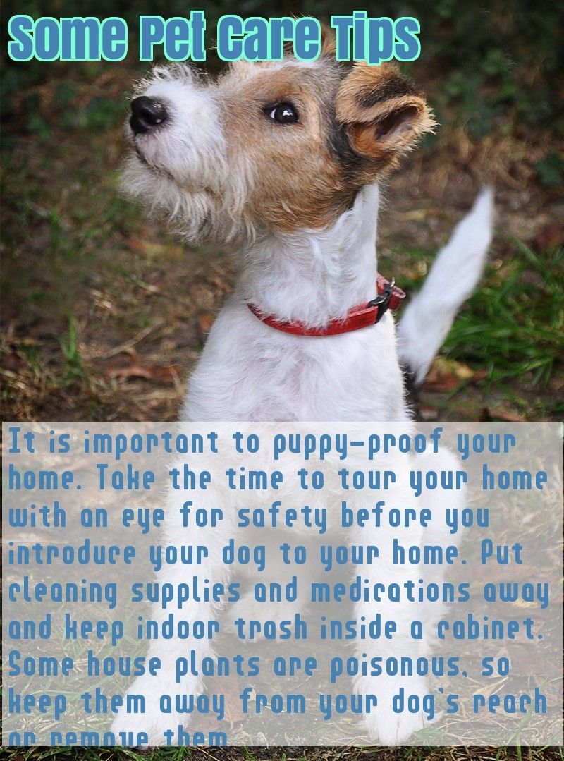 Check Out These Excellent Source Of Information About Dogs Dogs