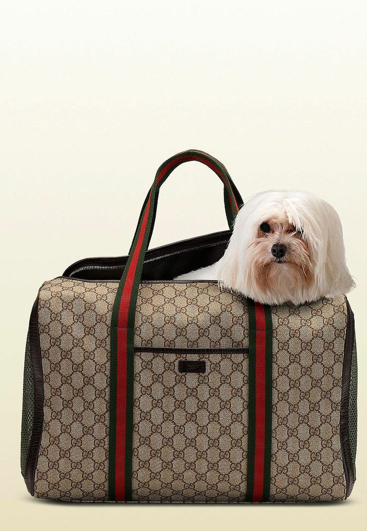 Gucci dog carrier love the bag but I don't think I would