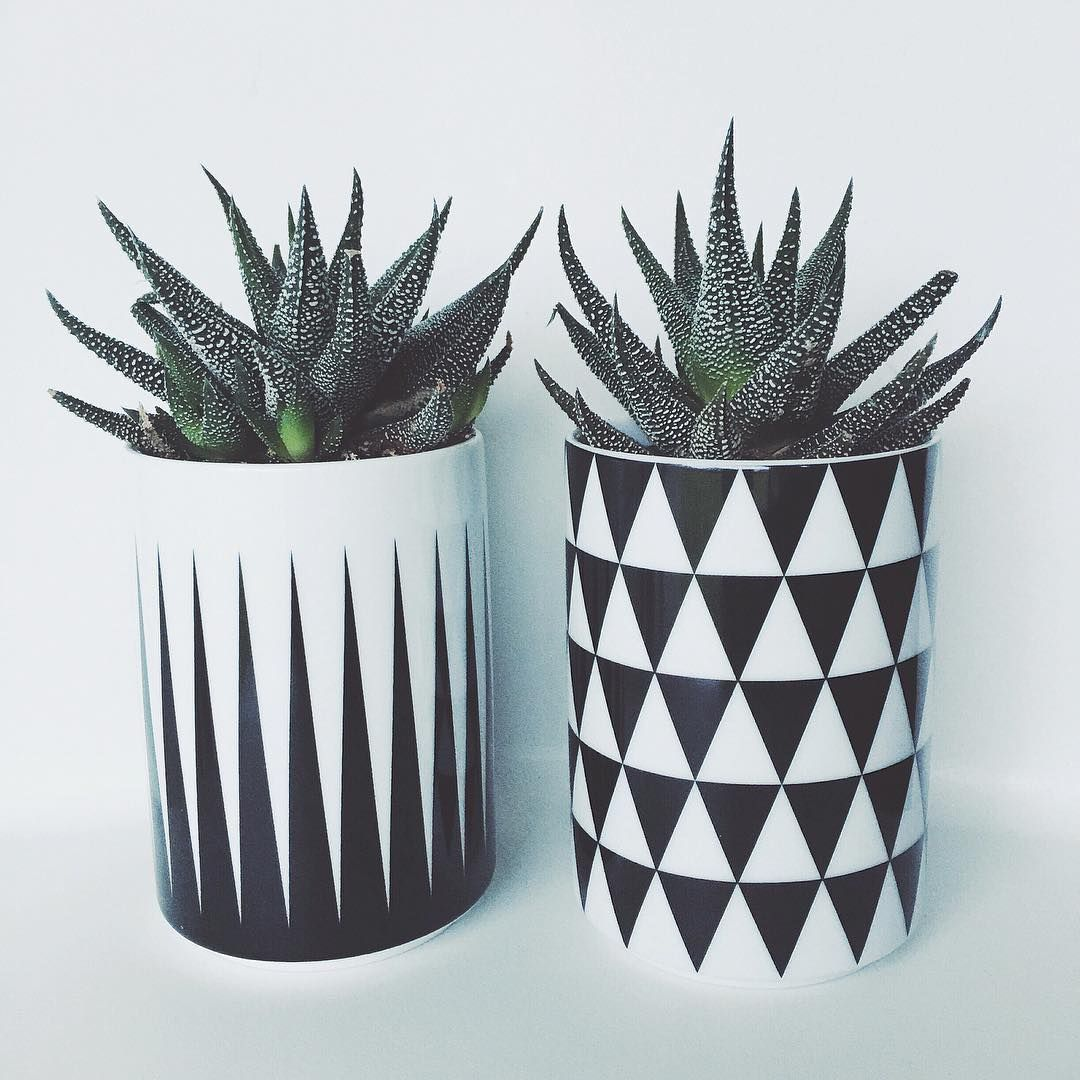 Pin de ibeth moritaz en cactus pinterest decoraci n for Objetos de decoracion online