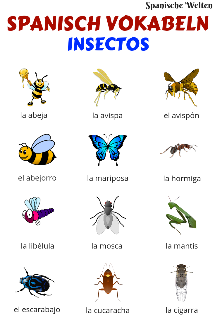 Spanisch Vokabeln: Insekten #learning