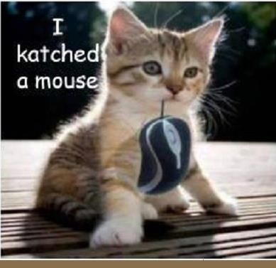 Funny Pictures: I katched a mouse
