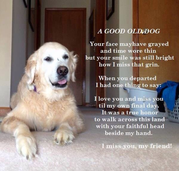 Old Dog Posted In Memory Of My Dear Old Boy Avery