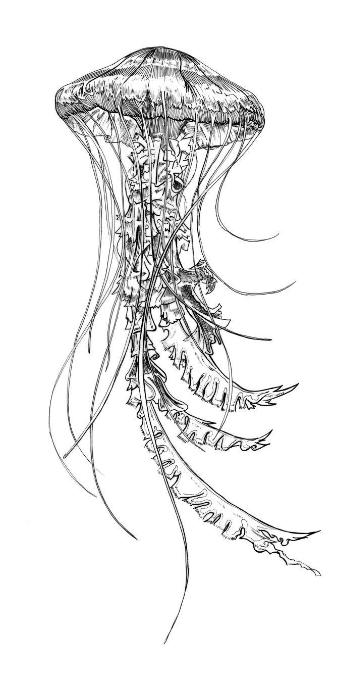 vintage jellyfish illustration