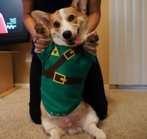 Image result for dogs dressed as nintendo characters