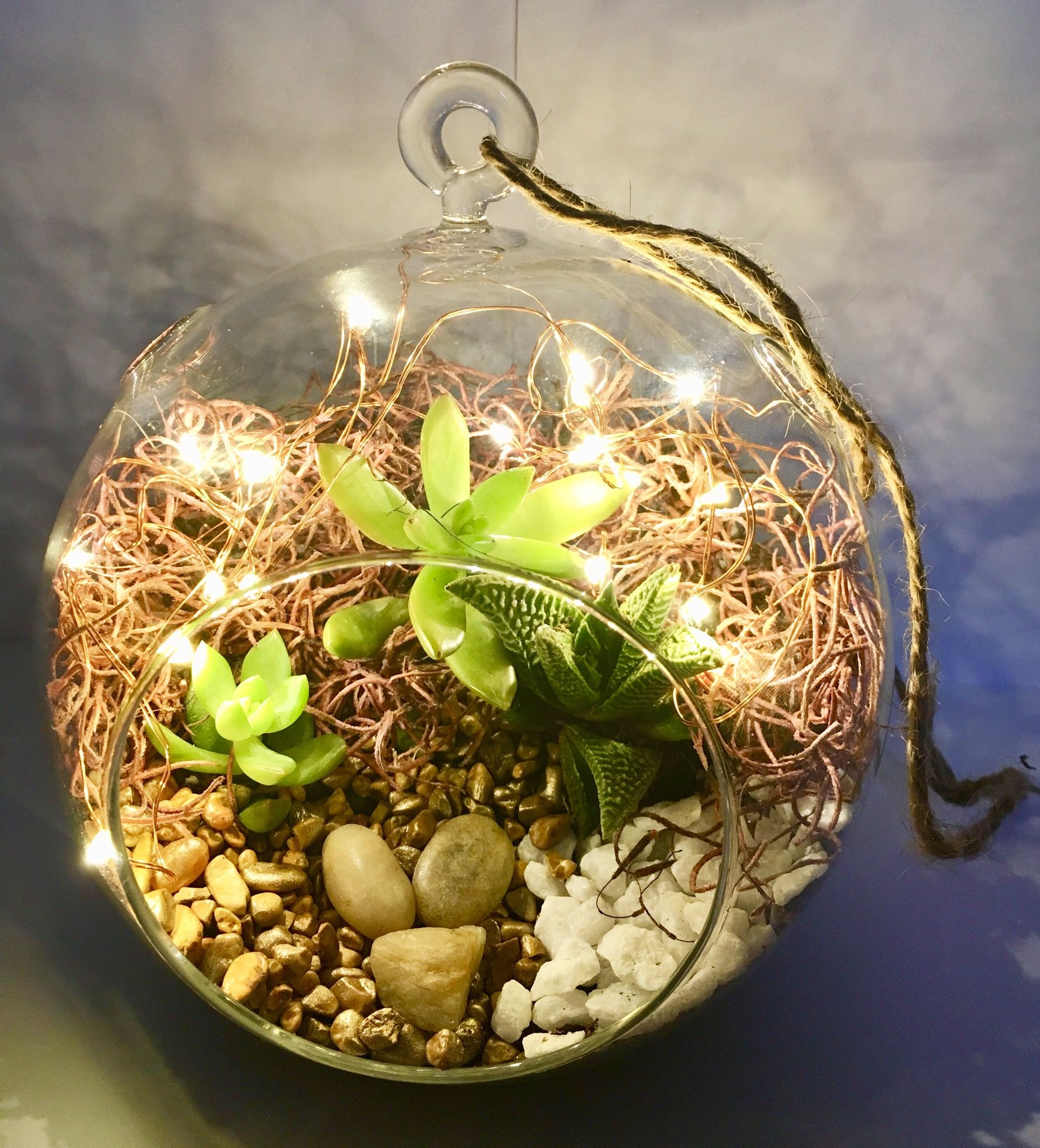 Hey check out hanging globe succulent terrarium w fairy lights at