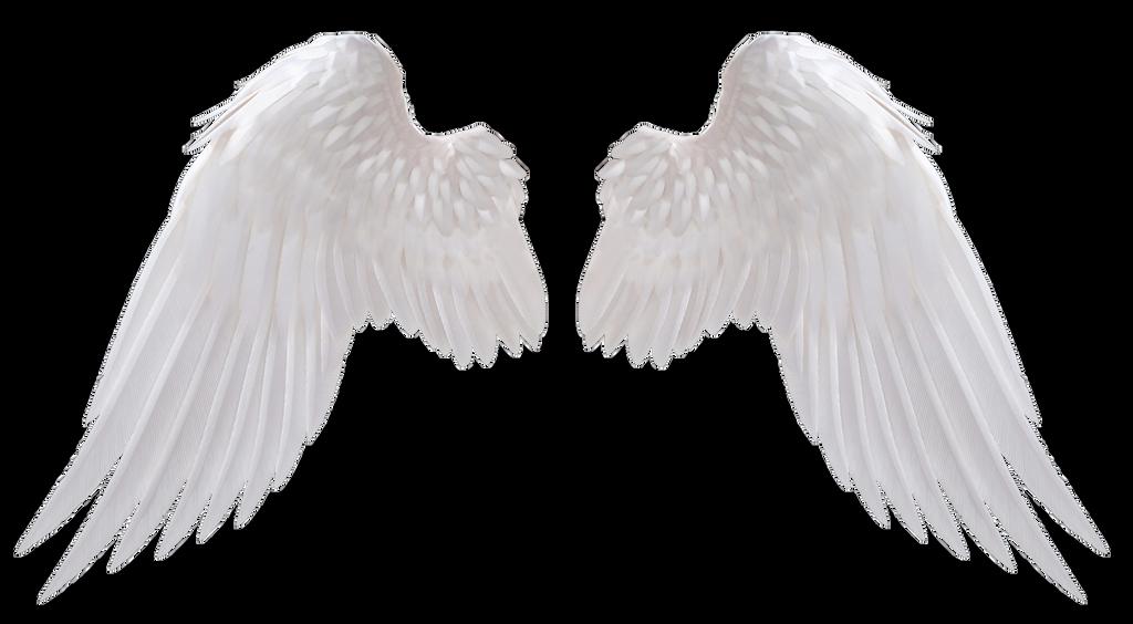 Angel Wings By Https Www Deviantart Com Hz Designs On Deviantart Angel Wings Png Wings Png Angel Wings Drawing