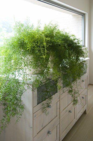 Indoor fern planters