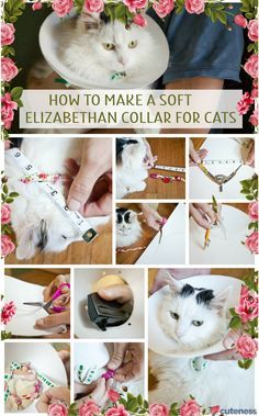 Wearing A Cone Or Collar Is Not Fun For Your Cat Diy A Soft