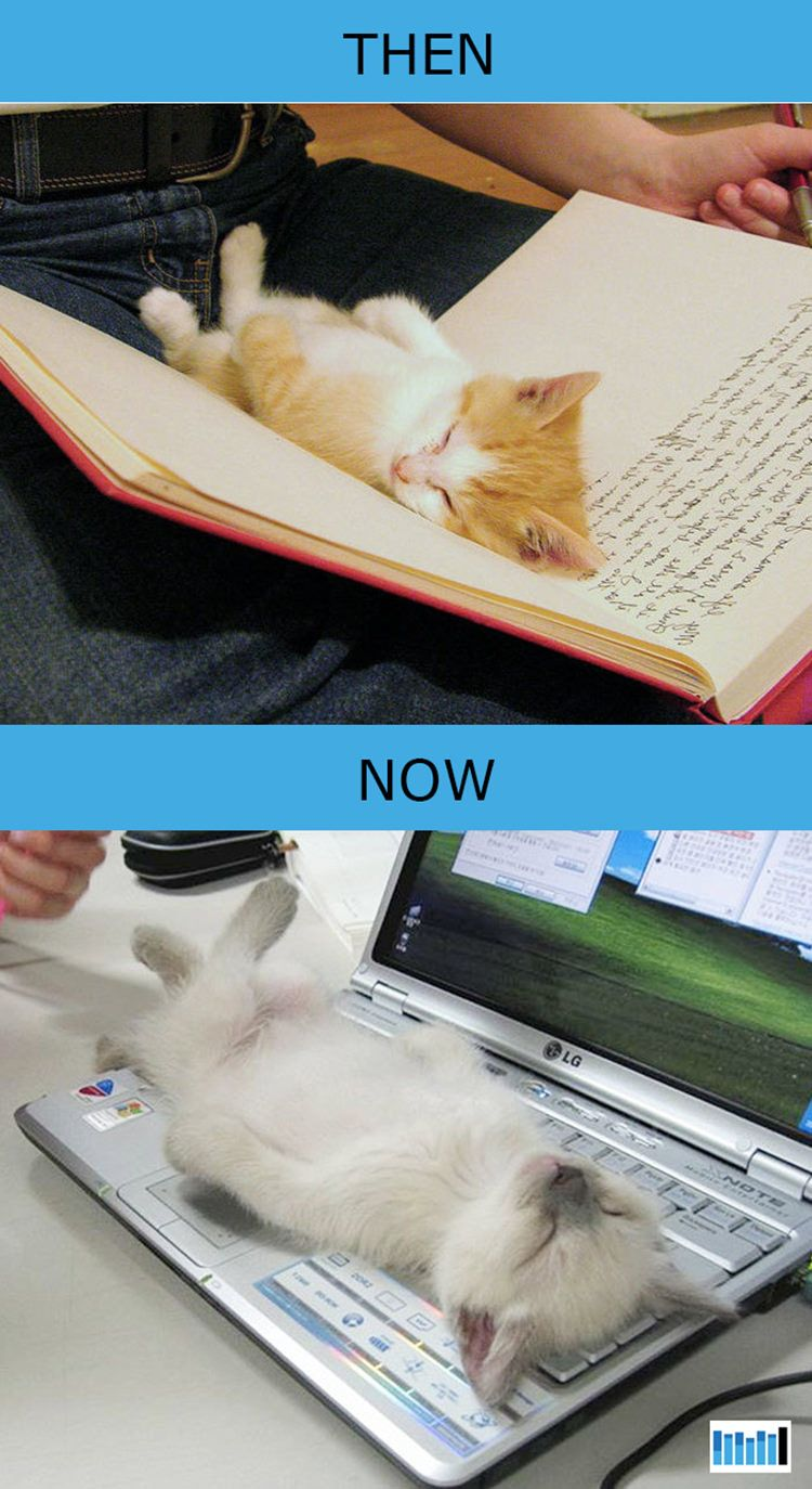 Then Vs Now How Cats Lives Changed Because Of Technology 15 Photos Cats Cat Behavior Cats And Kittens