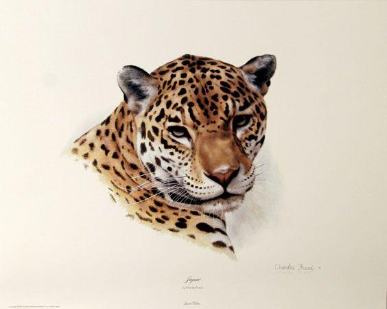 charles frace art images - Bing Images