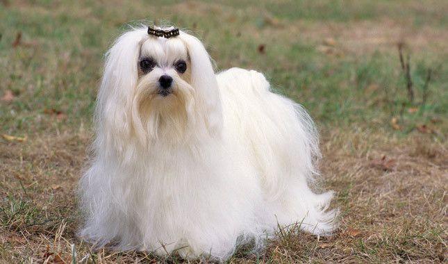 Dog Grooming Elyria Ohio