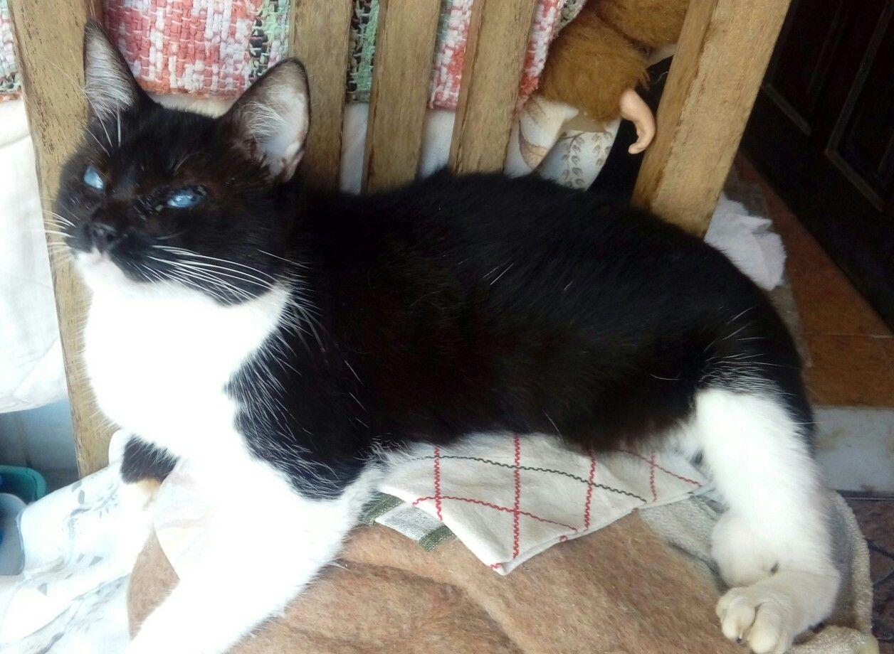 Nina, minha gatinha especial ..
