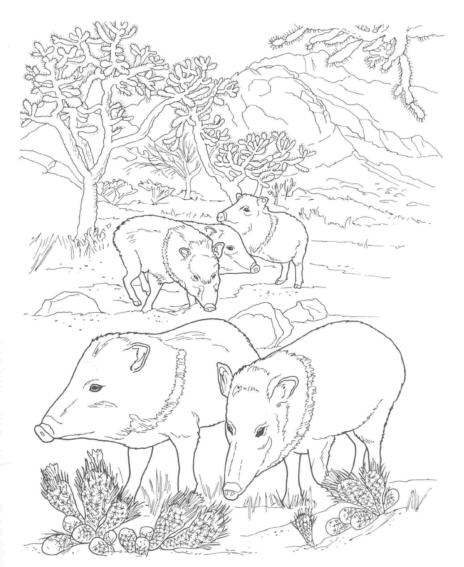 Coloring Pages Animals Southwestern Us