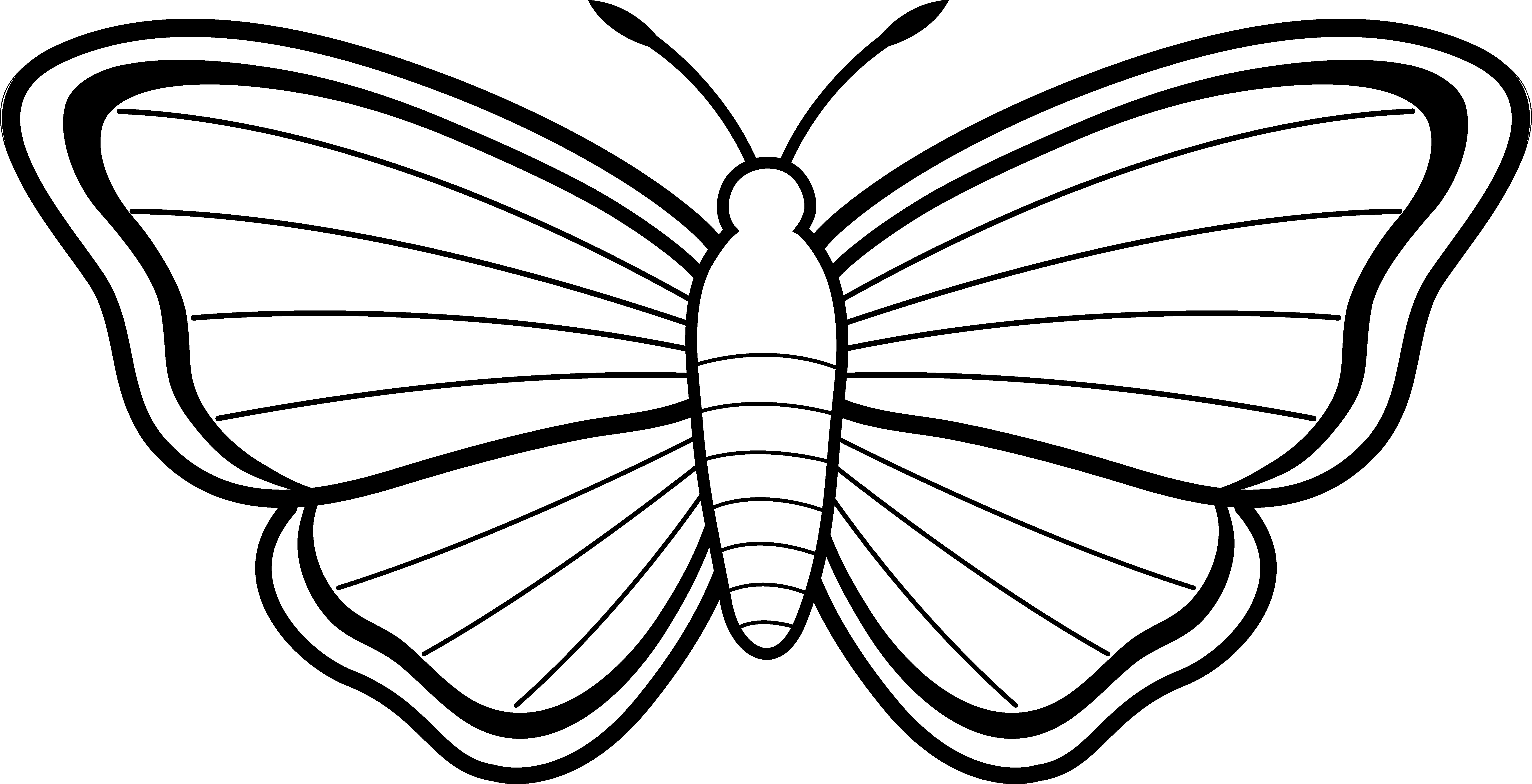 Butterfly outline drawing. Clipart panda free images