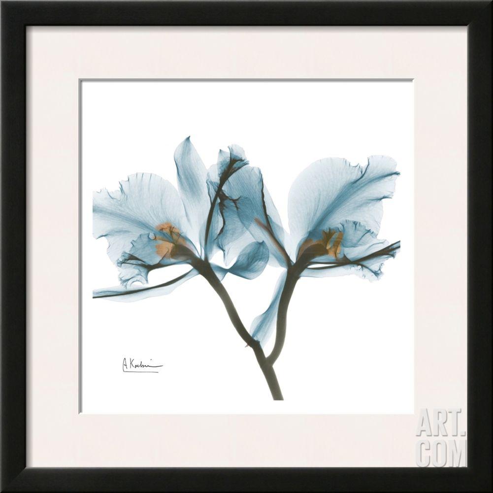 Orchids in blue by albert koetsier art crush popular pieces