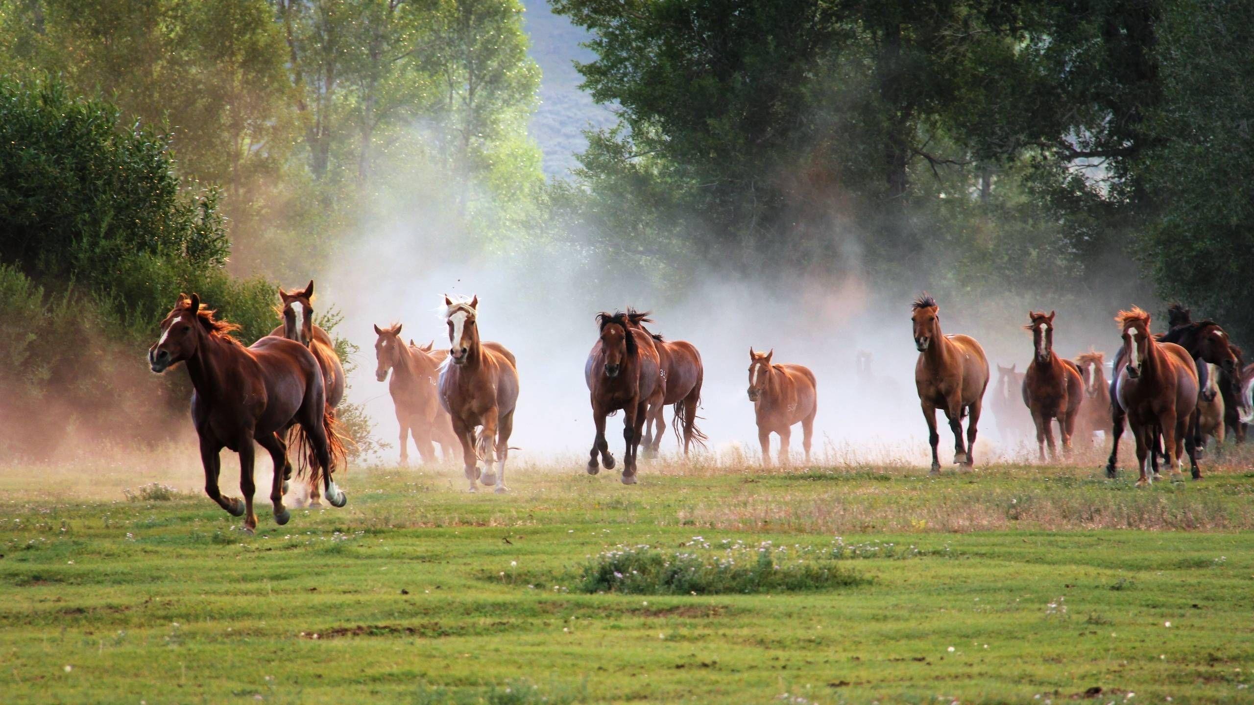 Horse HD desktop wallpaper Widescreen High Definition