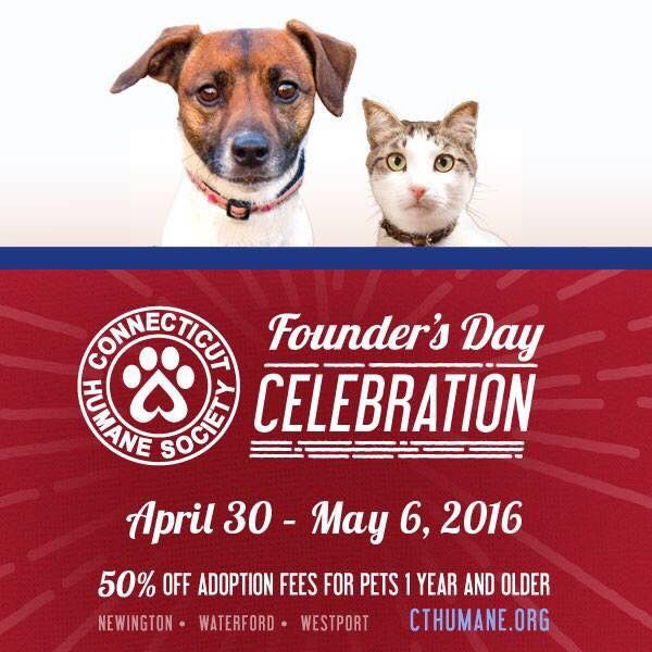 Meet Your Forever Friend At The Ct Humane Society We Are Celebrating Our 135th Anniversary By Offering 50 Off A Pet Life Pet 1 Pets