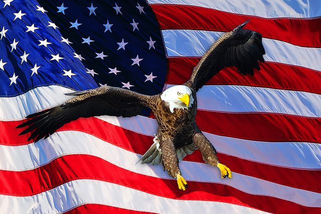 American Bald Eagle Flag Eagle Pictures American Flag Eagle Bald Eagle