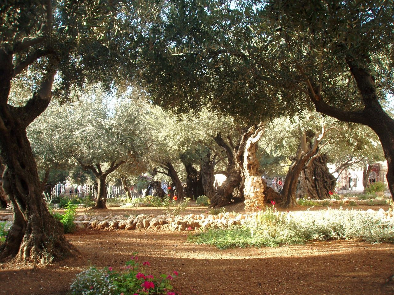 Garden of Gethsemane, Jerusalem | All things HOLY! | Pinterest ...