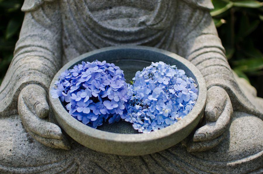 Having Hydrangea #japan