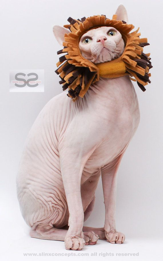 44fa8db0e8 Cat Costume Hat Lion Mane for Cats Sphynx Cat by SimplySphynx ...