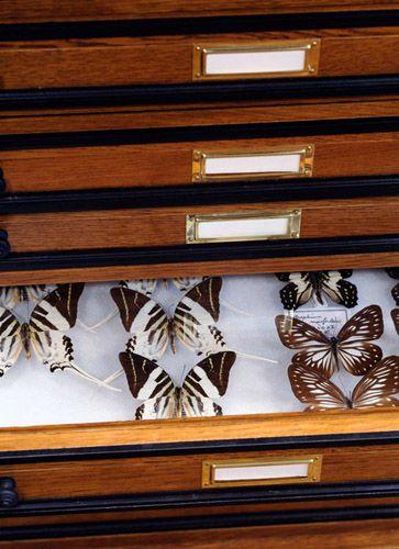 deyrolle entomologie vente d 39 insectes et de papillons paris deyrolle pinterest. Black Bedroom Furniture Sets. Home Design Ideas