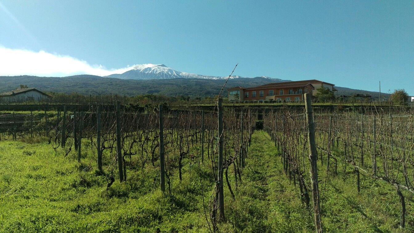 Assaggi di inverno in contrada #Martinella #Etna #Linguaglossa  #Nerello #Mascalese,  Nerello #Cappuccio #Carricante  #Vivera #Etna and #Sicily #organic #wine #Italy 🇮🇹 #sicily  Mail ✉ info@vivera.it