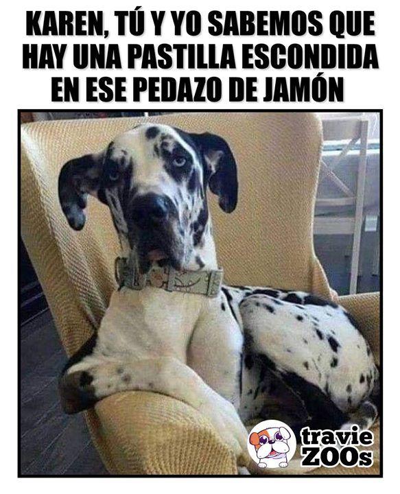 Untitled Humor Divertido Sobre Animales Memes De Animales Divertidos Humor De Perros
