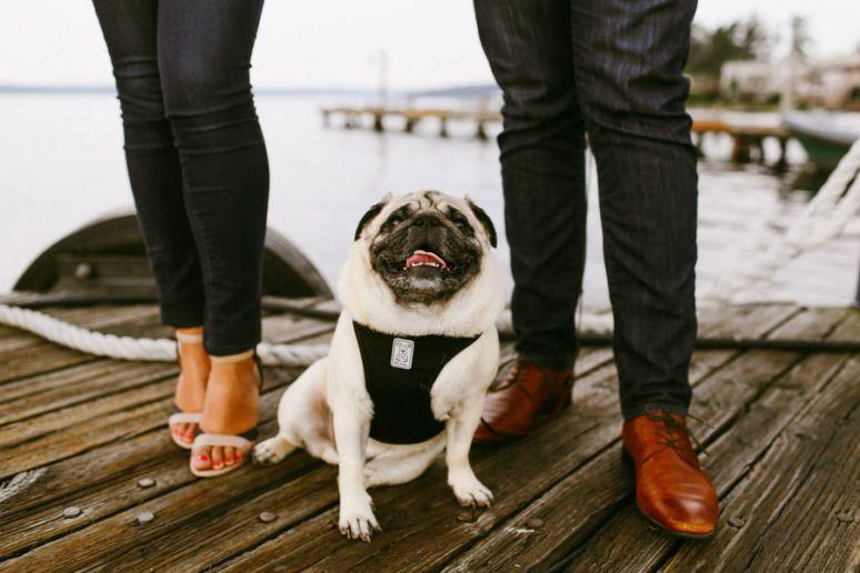 Engagementphotos Engaged Pug Seattle Melissagreenphoto With Images Engagement Photos Green Photo Seattle