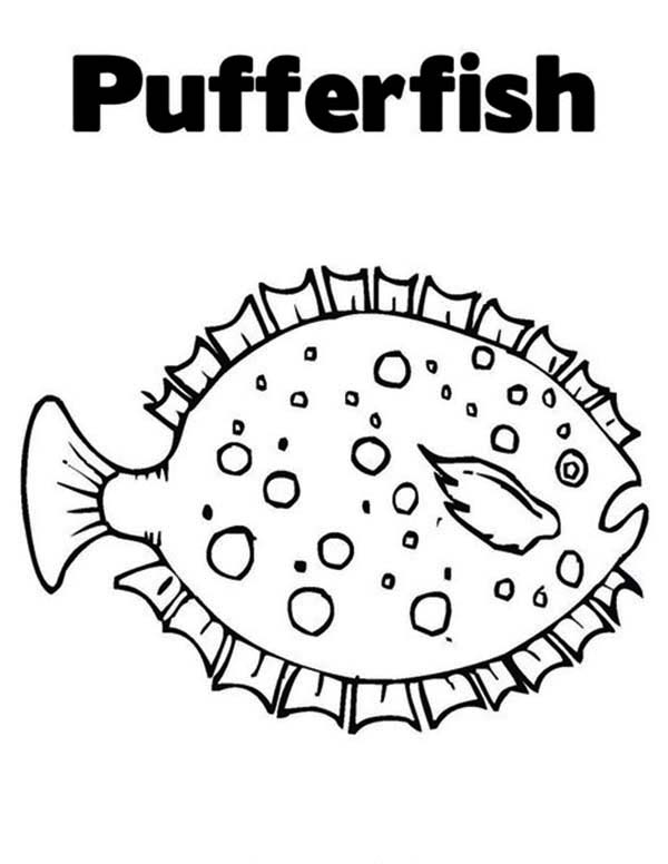 Beautiful White Spotted Puffer Fish Coloring Page Kids Play Color Fish Coloring Page Coloring Pages Puffer Fish