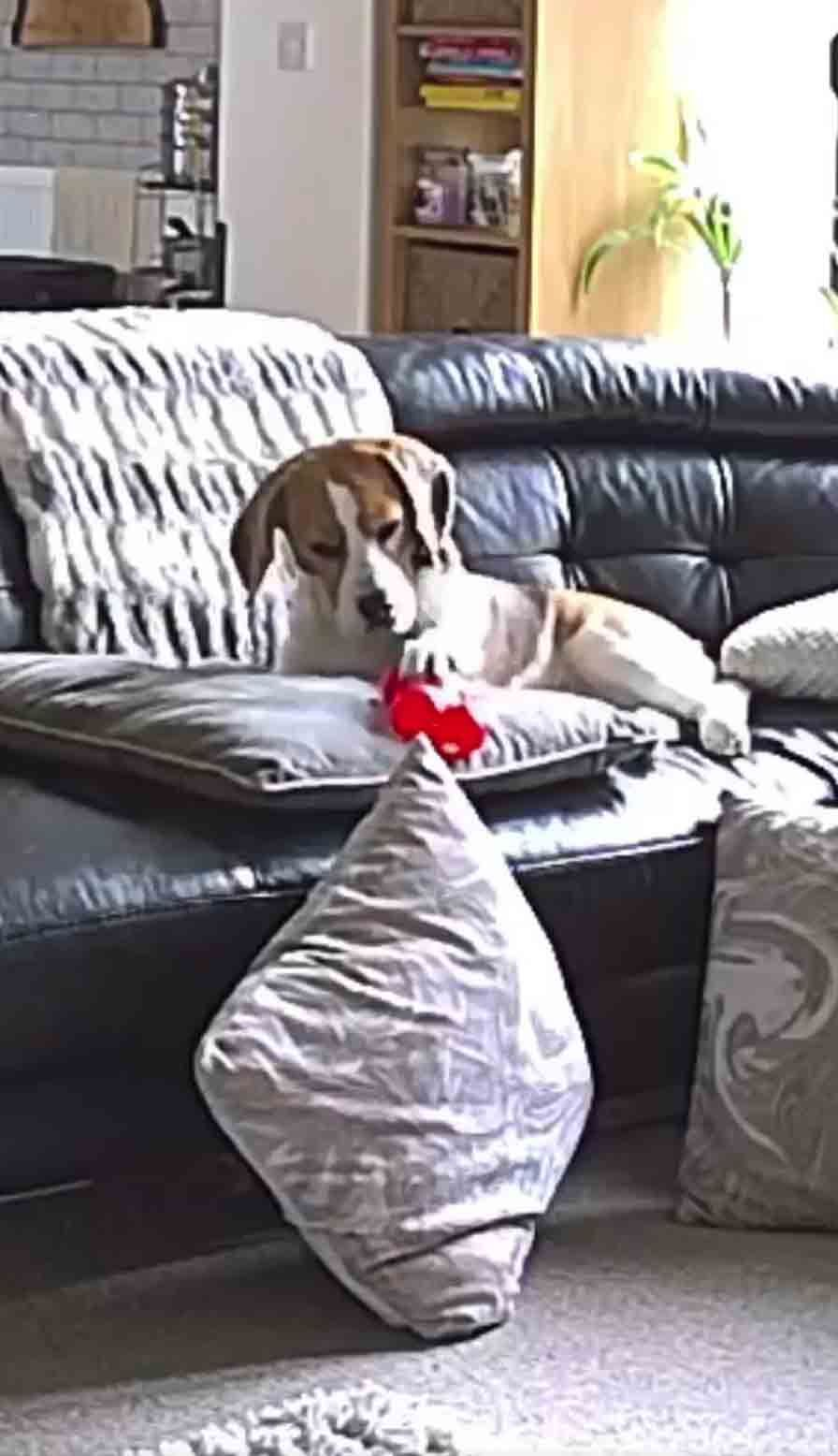 Dog's Reaction To Dropping His Toy Will Make You S