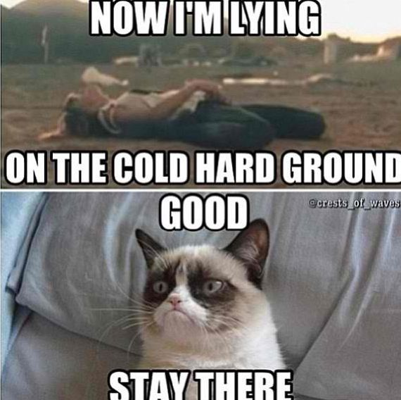 Funny Angry Wife Meme : I agree with angry cat lmfao pinterest swift