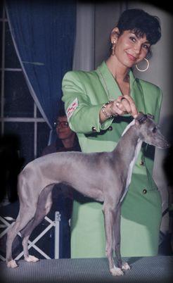 Honore Italian Greyhounds http://www.honorenyc.com ...