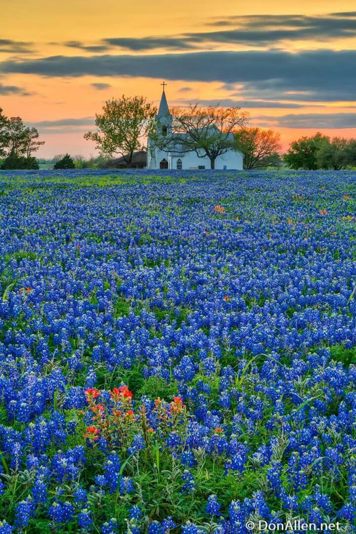 Pin by Ana Rebeca Sanchez on Fields of flowers Beautiful