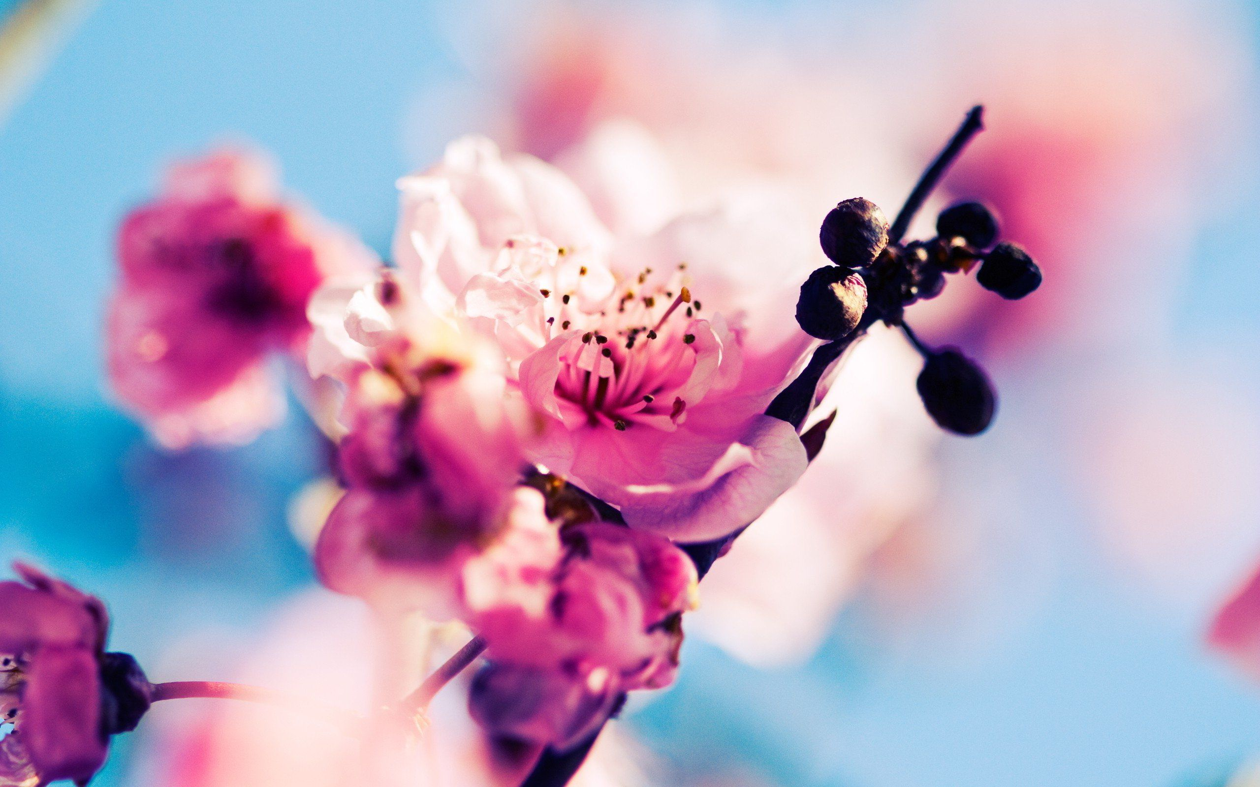 Spring Wallpapers Hd Download Free Hd Wallpapers Pinterest