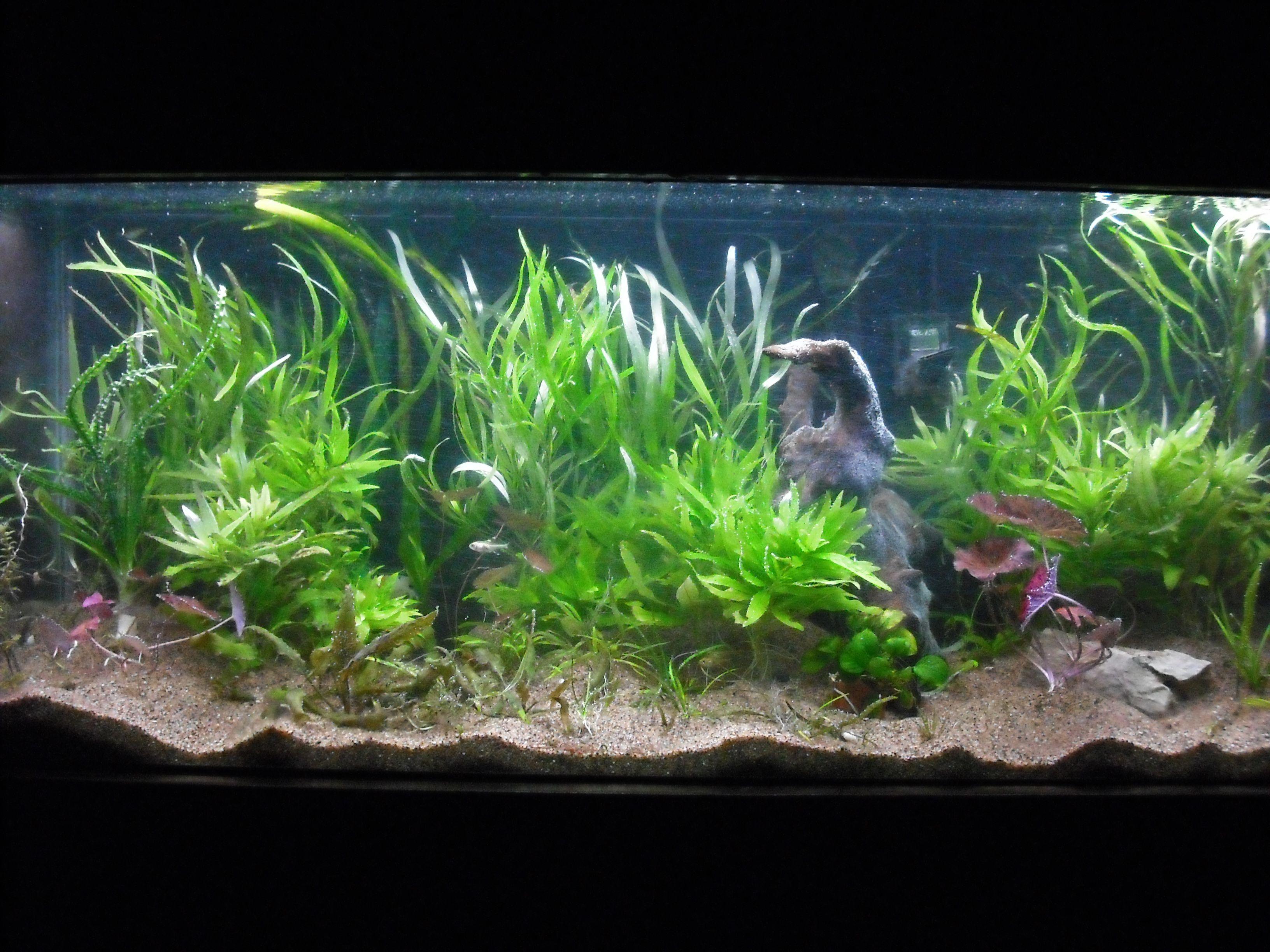 Freshwater fish tank high alkalinity - Planted Tank 30 Gallons