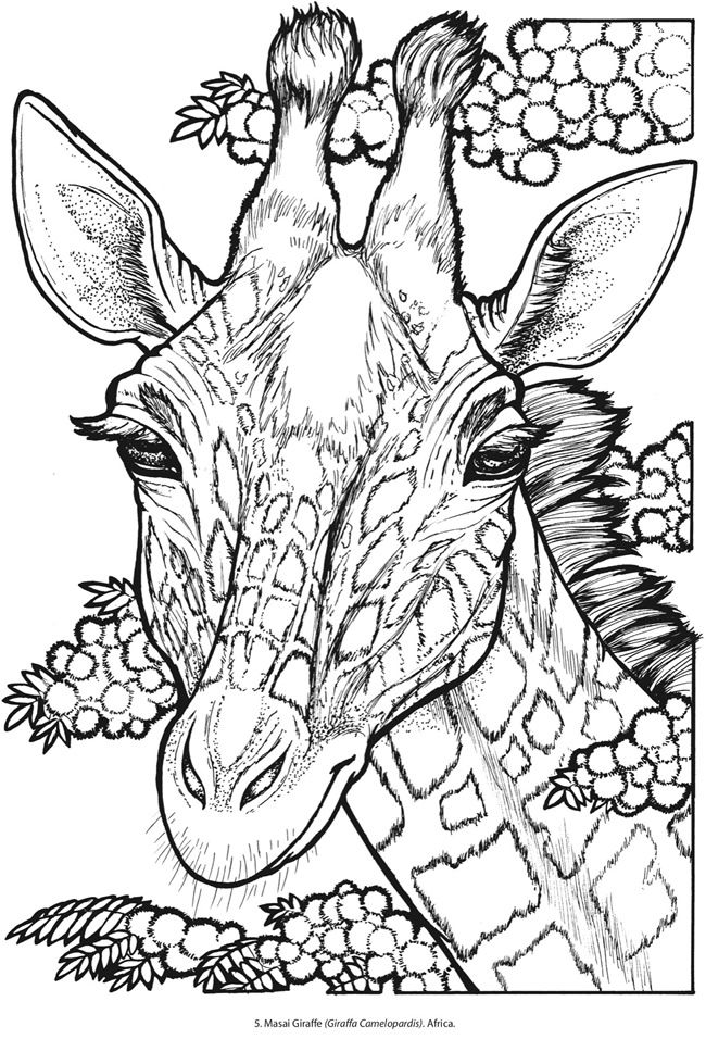 Masai Giraffe By Llyn Hunter Animal Coloring Pages Giraffe