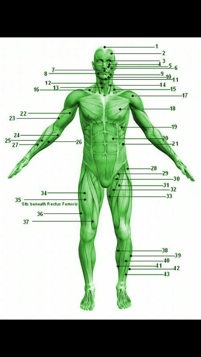 Anatomy Quiz Healthy Body And Mind Pinterest Muscular System