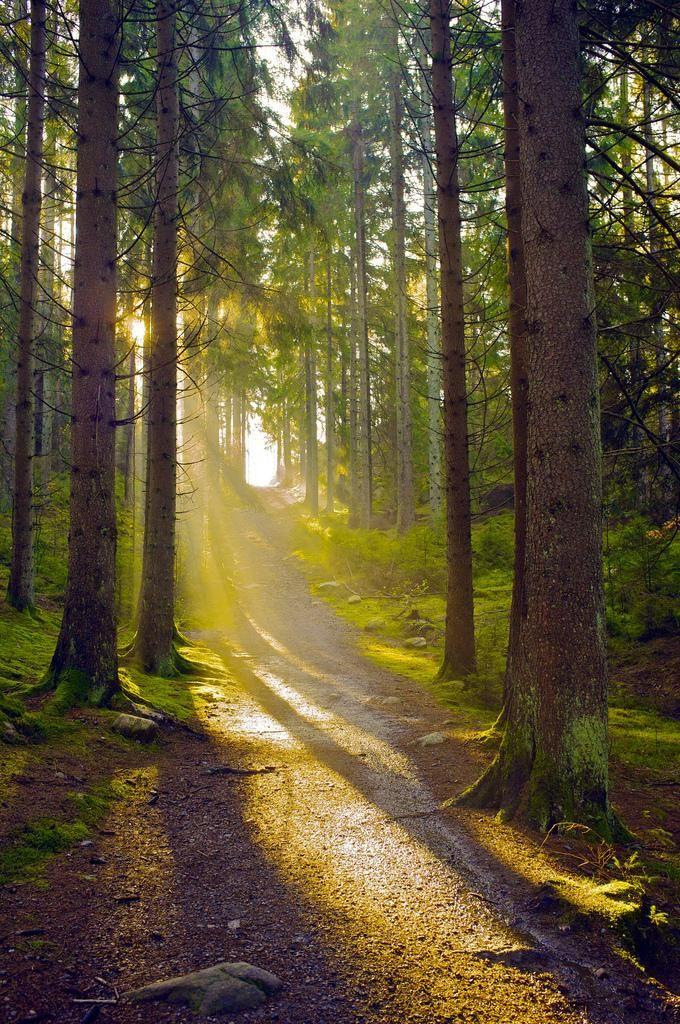 Sunlight into Swedish forest