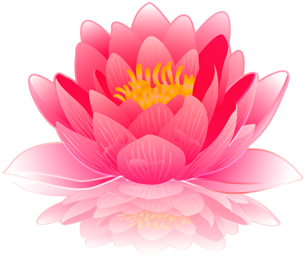 Pink Water Lily PNG Clip Art Image Flores