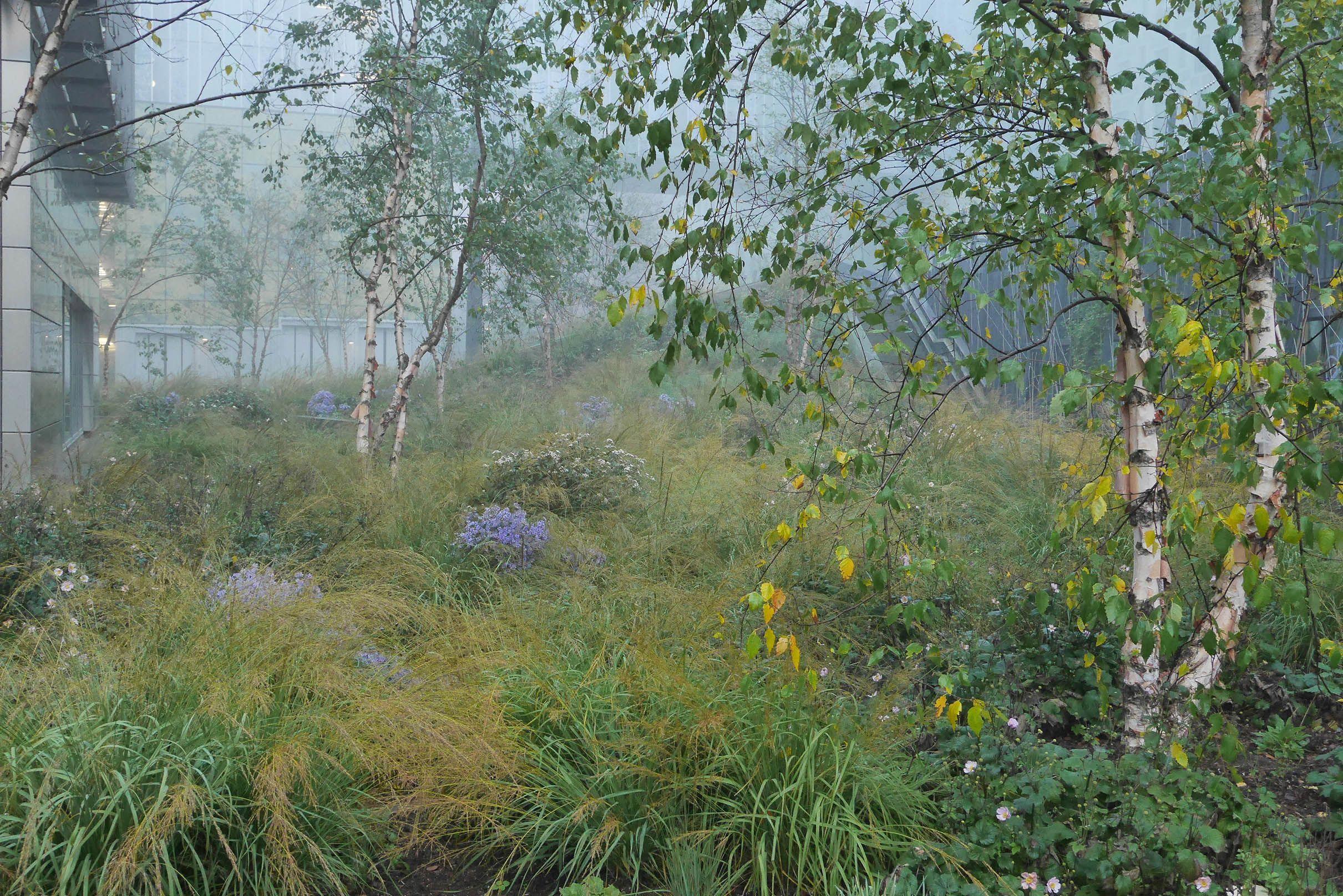 Woodland At Ichtushof Netherlands Piet Oudolf Dutch 400 x 300