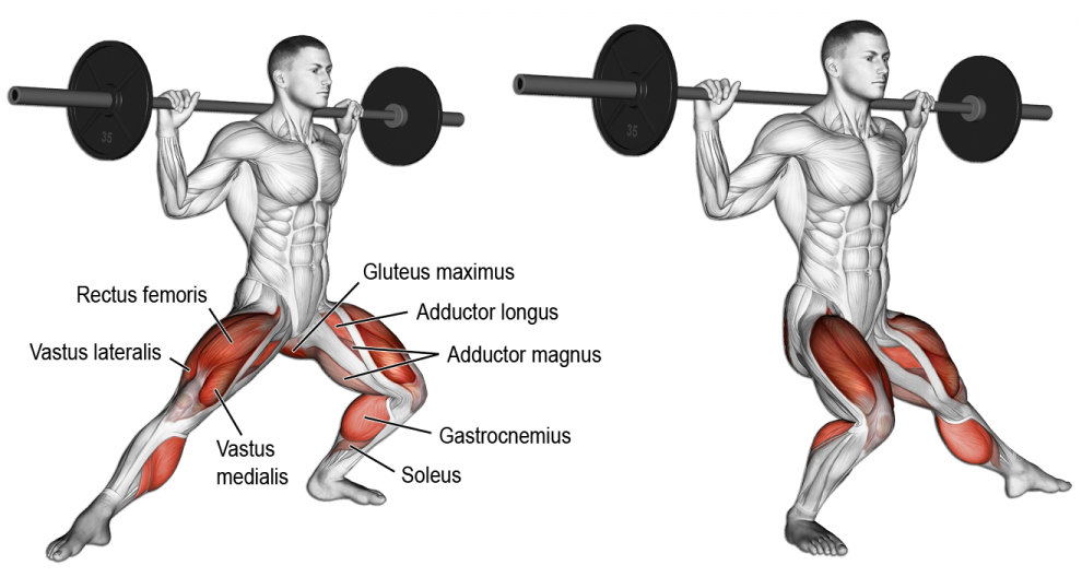 Pin by Cyril on Anatomie musculation : Jambes | Pinterest | Compound ...