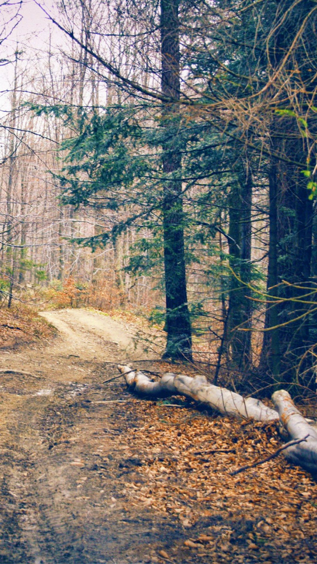 Hiking Forest Road Iphone 6 Wallpaper Download Iphone Wallpapers Ipad Wallpapers One Stop Download Forest Road Iphone 6 Wallpaper Iphone 5s Wallpaper