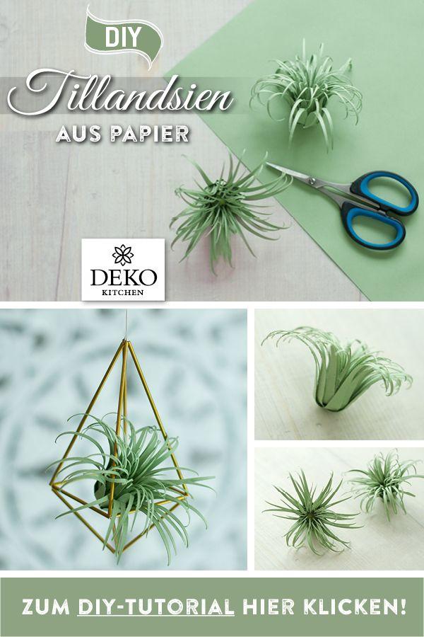 Photo of DIY: Air Plants (Tillandsien) eignen sich wunderbar für viele hübsche Dekorati…