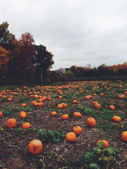 Can't wait to visit a pumpkin patch! Not sure if Texas has any though. Haha.