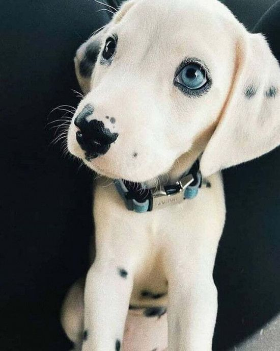 Pin By Erin A On Animals In 2020 Puppy Cartoon Cute Baby