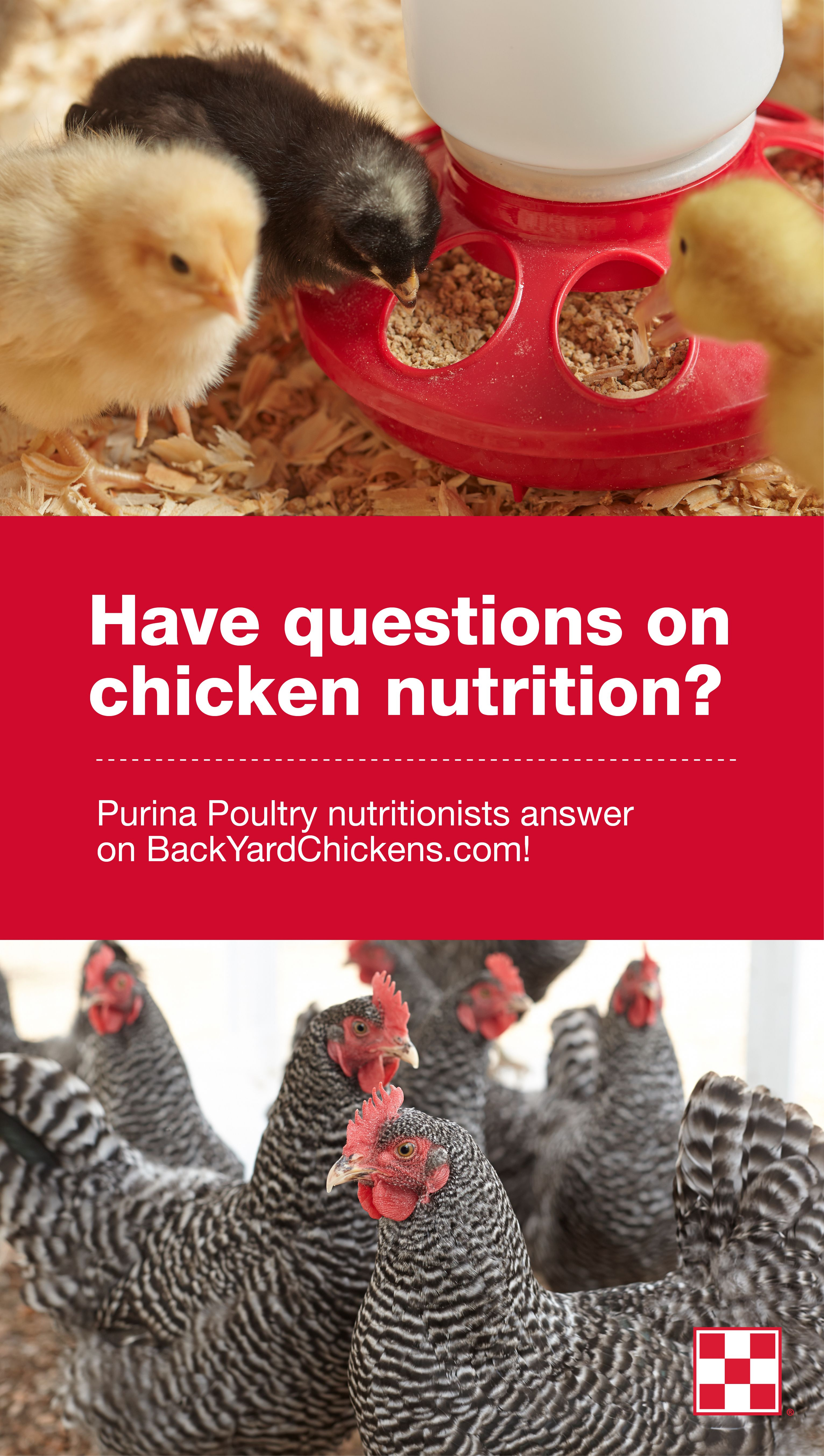 Have Questions About What To Feed Backyard Chickens? Purina Poultry  Nutritionists Answer Questions On The