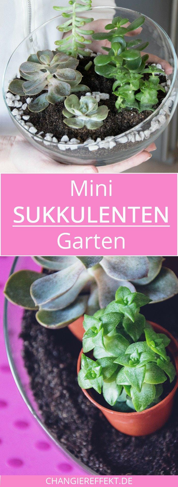 sukkulenten mini garten zum selbermachen - diy | minis, garten und, Gartenbeit